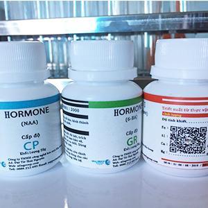 hormone kích hoa